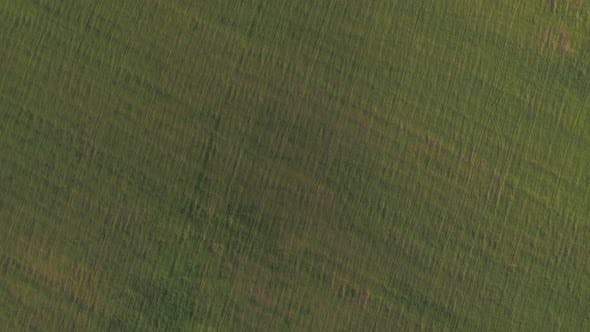 Thumbnail for Aerial Green Landscapes, Russia
