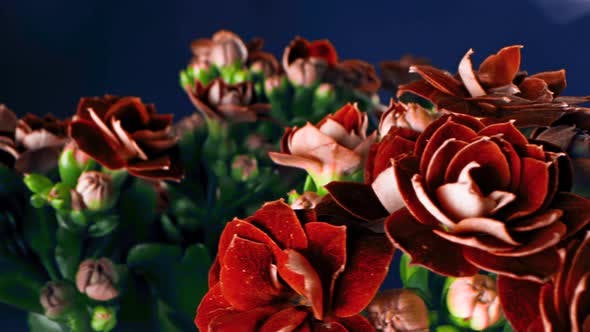 Cover Image for Petals of red solid flowers