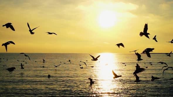 Thumbnail for Seagulls Over Sea 2