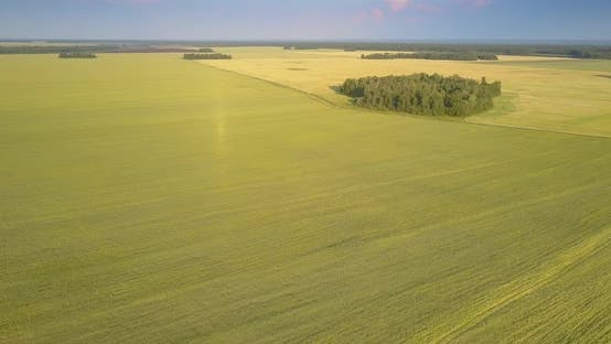 Thumbnail for Aerial View Green Groves Scattered Among Vast Wheat Fields