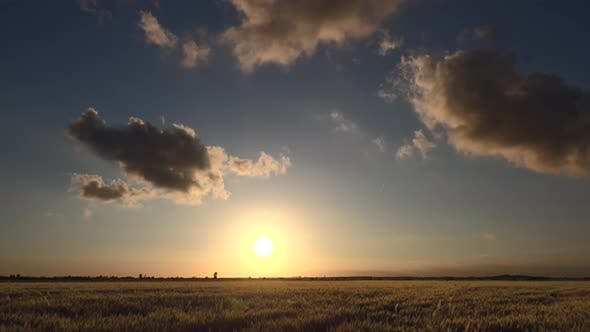 Thumbnail for Sunset in Flat and Wide Wheat Field
