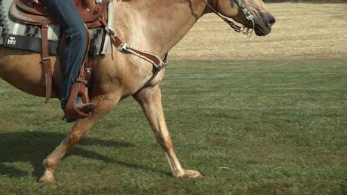 Horse running in super slow motion, shot on the Phantom Flex 4K at 1000fps