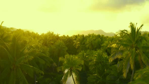 Thumbnail for Palm Tree Jungle in the Philippines. Concept About Wanderlust Tropical Travels