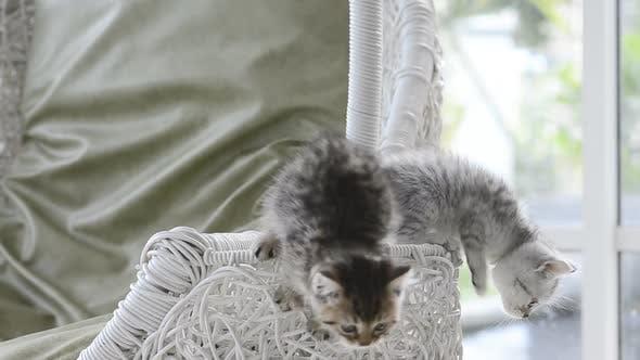 Kätzchen spielen im Korb Swing