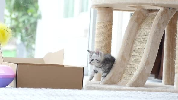 Cute Tabby Kitten Playing With Box Slow Motion