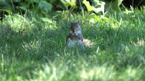 NYC Central Park - Squirrel with Nut