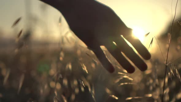 Hand in the Sunset