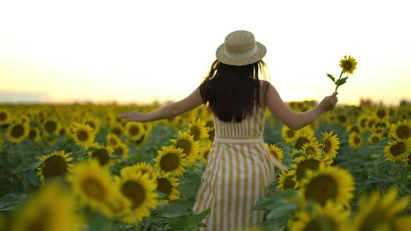 Thumbnail for Back View Beauty Girl with Long Hair in Dress Running on Sunflower Field in Sunset Summer