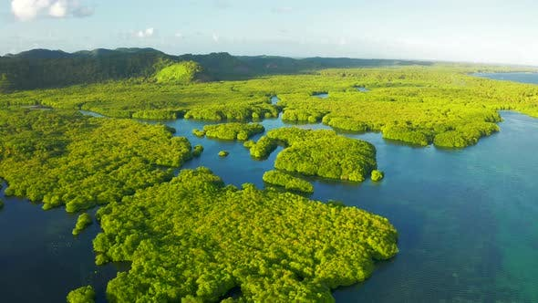 Cover Image for Anavilhanas Archipelago, Flooded Amazonia Forest in Negro River, Amazonas, Brazil