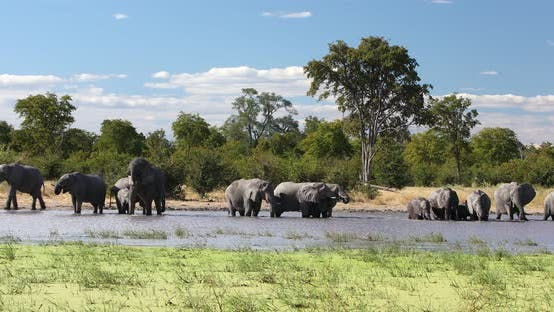 Thumbnail for African Elephant on waterhole, Africa safari wildlife