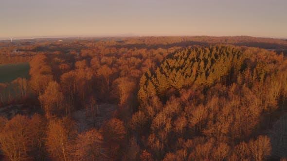 Thumbnail for Brown Forest During Sunrise Denmark