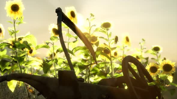 Thumbnail for Old Vintage Style Scythe and Sunflower Field