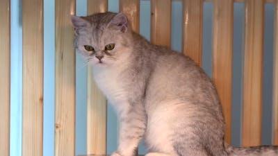 Cat Sitting On Wood Shelf