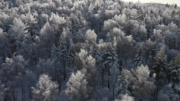 Thumbnail for Aerial View of a Winter Snow-covered Pine Forest