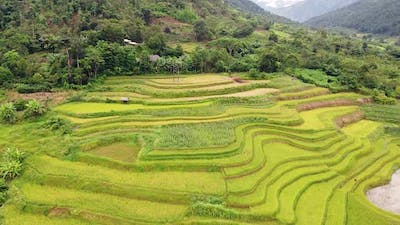 Aerial of a Spectacular Yellow Green Rice Terraces on the Hills in Countryside