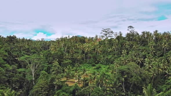 Thumbnail for Aerial Top View Forest Tree, Rainforest Ecosystem