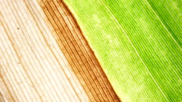 Thumbnail for Green Leaf Analysis