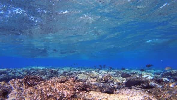 Underwater Blue Waves