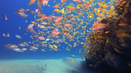 Blue background with School of Fishes
