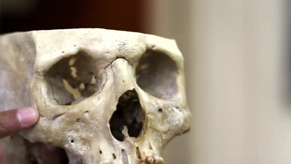 Thumbnail for Ancient Human Skull.