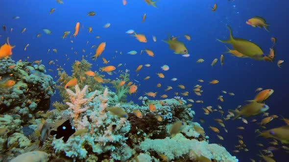 Cover Image for Underwater Coral Reef Marine