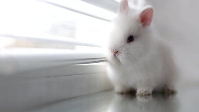 Funny rabbit sleeping on a white background