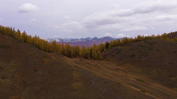 Kurai Steppe Yellow Larches Kurai Ridge Autumn