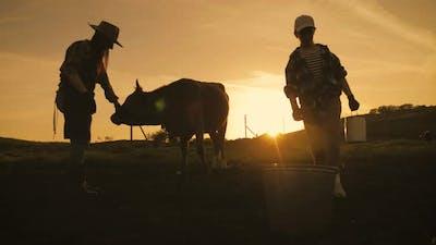 Cows Farm Concept