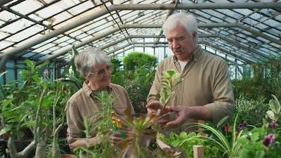 Elderly Couple in Greenhouse