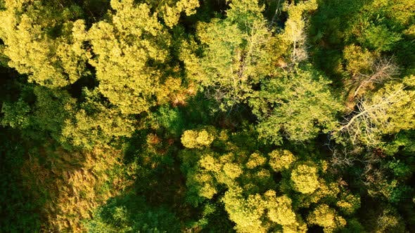 Thumbnail for Beautiful trees in  forest on sunny day