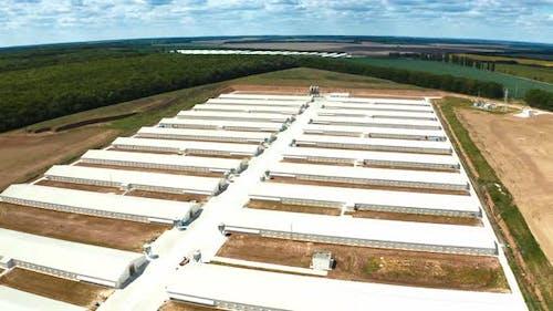 Poultry farm industrial. Complex of white buildings poultry farm