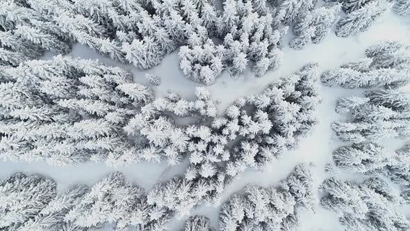 Winter Forest with Heavy Snow Filmed Straight from Above with a Drone