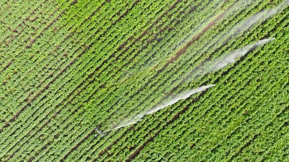 Thumbnail for Aerial Footage: Irrigation Sprincler on an Agricultural Field