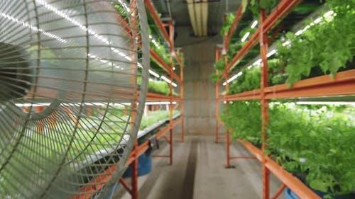 Vertical Farm With Rows Of Growing Seedlings