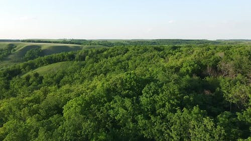 aerial view over the forest in a hilly area. tree crowns