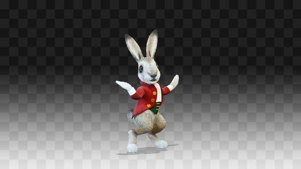 Rabbit Oliver Simple Dance