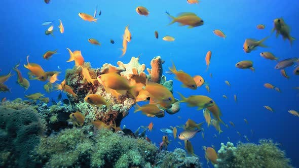 Cover Image for Tropical Sea Soft Coral