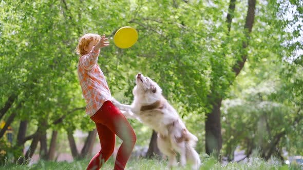 Thumbnail for A Dog Border Collie Is Doing a Somersault in the Air Catching an Orange Frisbee That the Coach