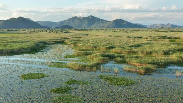 Marsh wetland and floodplain covered with low green vegetation, grass, rushes and reeds