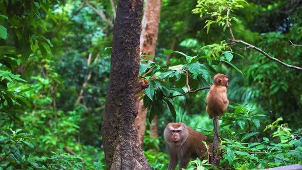 Thumbnail for Monkeys in The Trees in The Rainforest