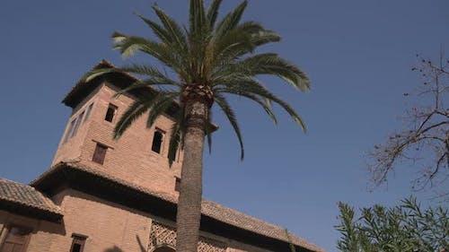 Torre de las Damas behind a palm tree