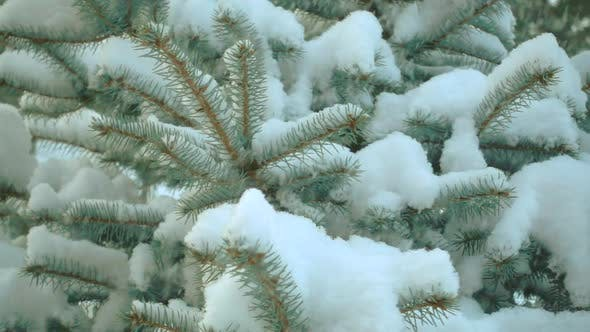 Thumbnail for Qualitative Slow Motion Snow and Fir Tree.