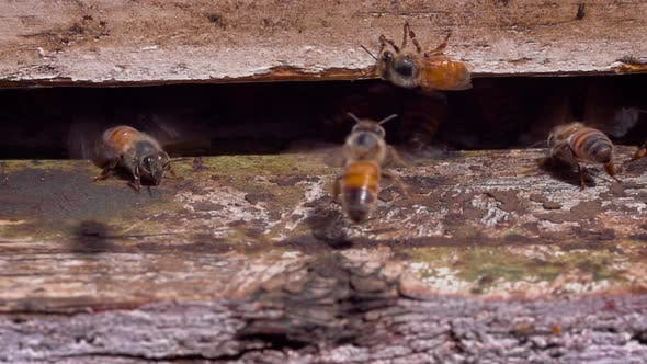 Bees entering a bee hive at a farm