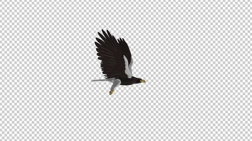 Sea Eagle - 4K Flying Loop - Side View