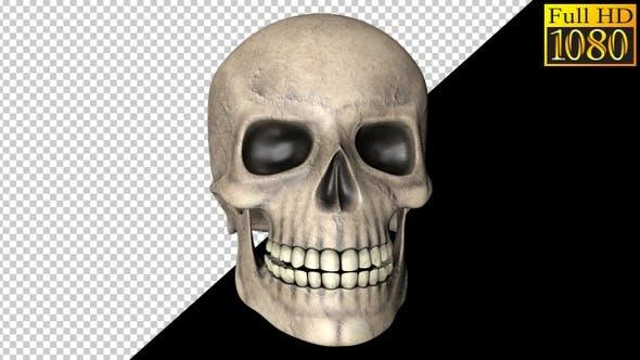 Helloween Skull Video Loops Pack 002