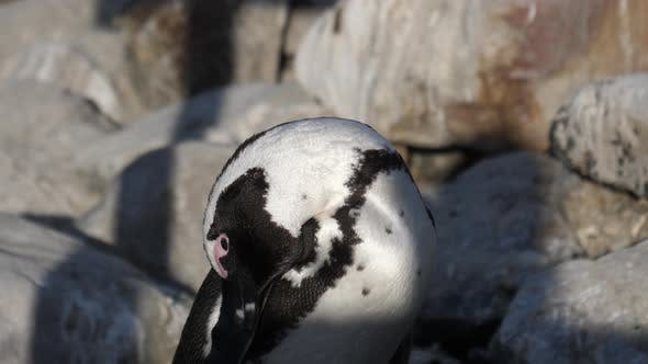 Close up from a penguin on the rocks