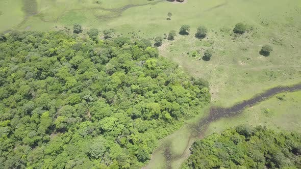 Savannah Pantanal Dry Season in Brazil South America
