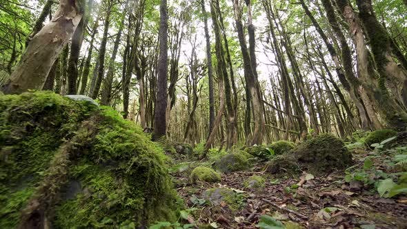Thumbnail for Mossy Forest Floor