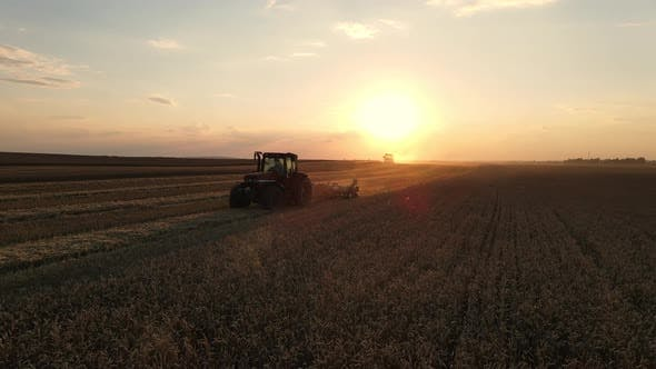 Combine Harvester Working In A Wheat Field At Sunset. Organic Farming.