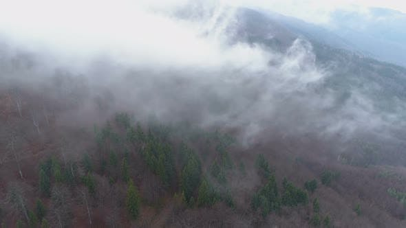Morning Mist Floating Above the Dense Woods, Clouds Above the Forest Area